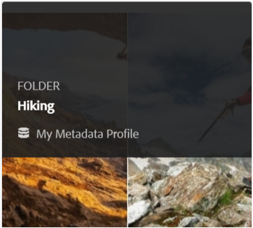 Card view displays the metadata profile applied to a folder